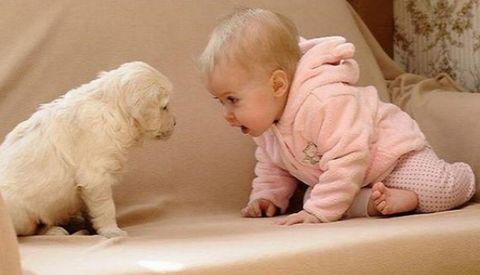 how dare - 大胆な赤ん坊
