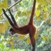 猿が手を伸ばす