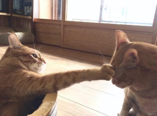 猫がクレーム猫パンチ