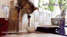 catreachingbowl