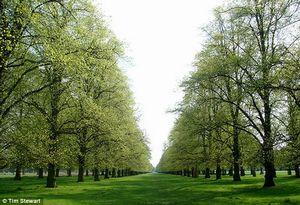 the gorgeous Bushy Park