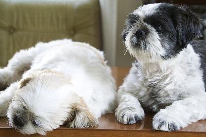 似てるけど違う犬