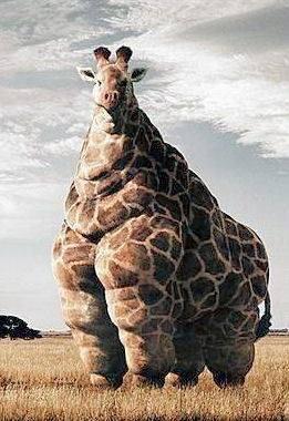 giraffle
