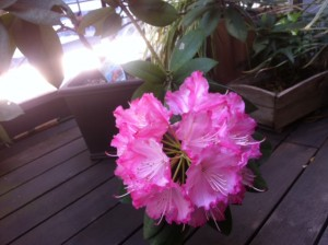 知ってて良かった!花にまつわる英語集