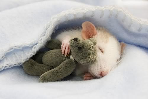 sleepingrat
