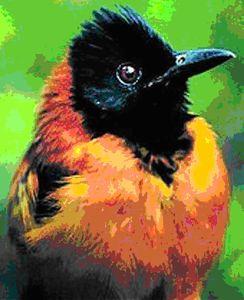 Papua New Guinea3