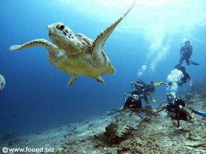 swimming-turtle-in-GiliTrawangan