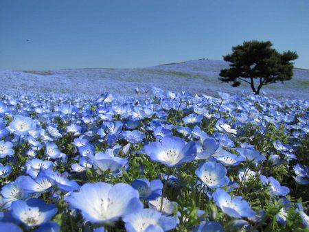 お花がきれい 英語