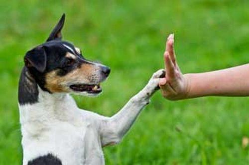 bodylanguage dog