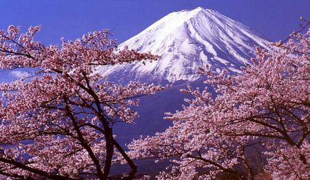 日本の桜と富士山