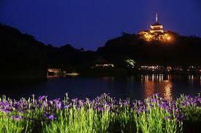 Fireflies in Yokohama by Jennifer