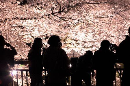 花見夜桜を英語で