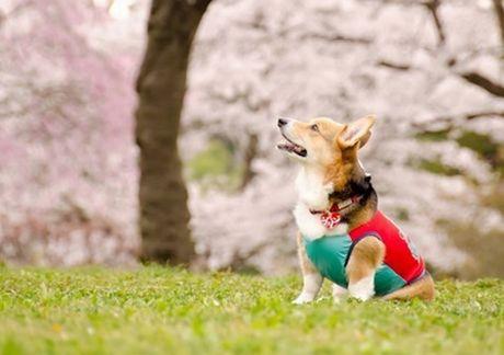 挨拶をする犬