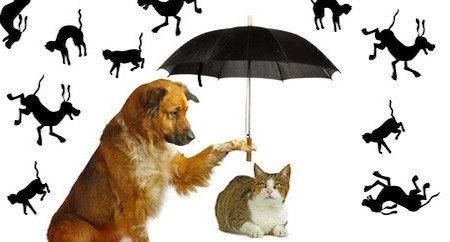 raining cats and dogsの意味