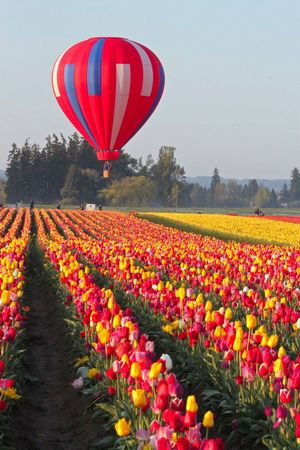 fantastical floats with tulips