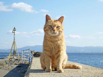 猫ちゃんが待ってるよ