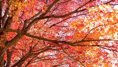 秋の紅葉英語