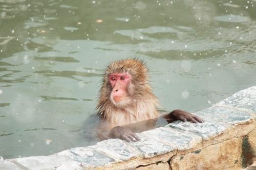 冬のお猿の温泉