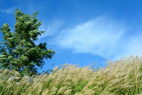 「今日は風が強いね!」スモールトークに使える簡単な表現♪