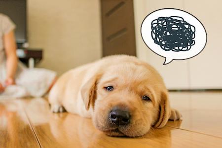 挫折する犬