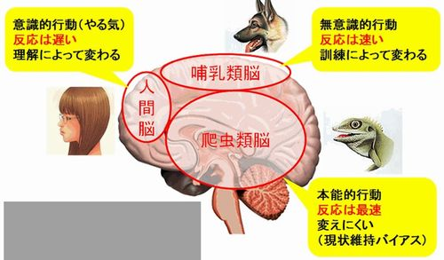 人間脳と動物脳
