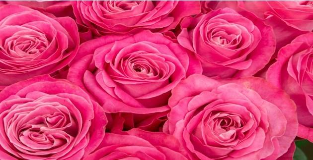 ピンクはハッピーカラー