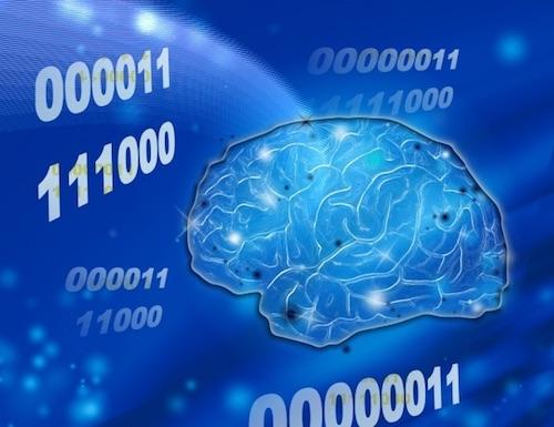 脳の記憶領域