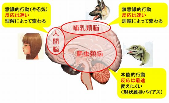 人間の脳の構造とモラルライセンス