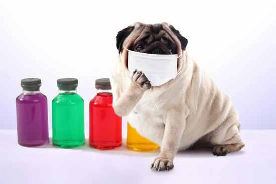 花粉症のイヌ