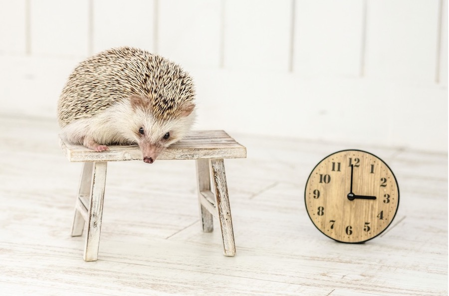 what time is it nowは使わない