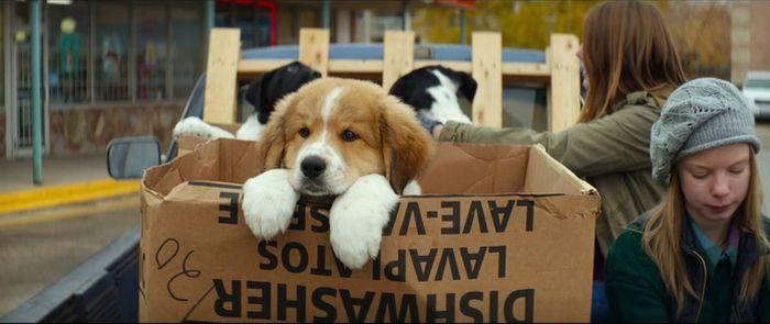 A Dog's Purpose3