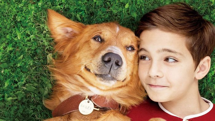 A Dog's Purpose2
