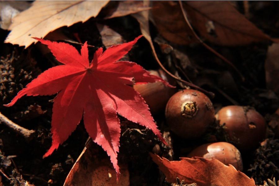 """""""食欲の秋""""って日本だけ?〈秋の味覚〉は英語でなんていうの?"""