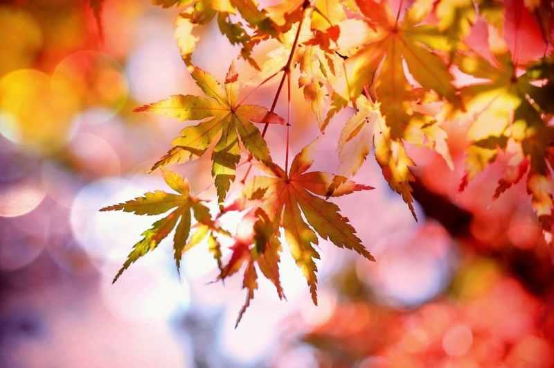 秋の実りを英語で