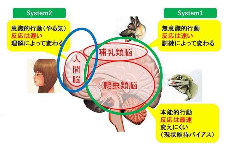 動物脳と人間脳