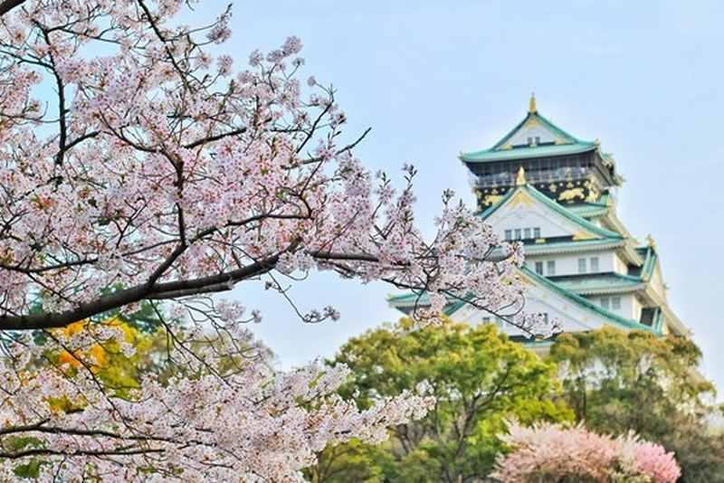 英語で日本のお花見を説明する