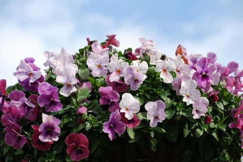 お花のイディオムを使って会話を素敵に盛り上げちゃおう♪