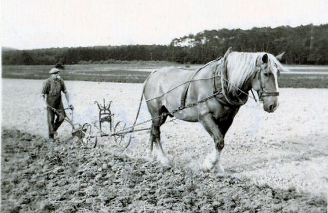 plowhorse.jpg