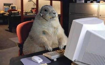animalstudy.jpg