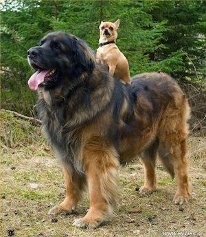 bigsmalldogs.jpg
