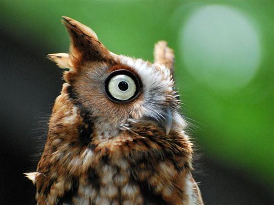ふくろう:英語名 owl
