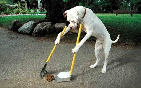 dogcleaning.jpg