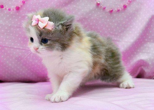 girlycat.jpg