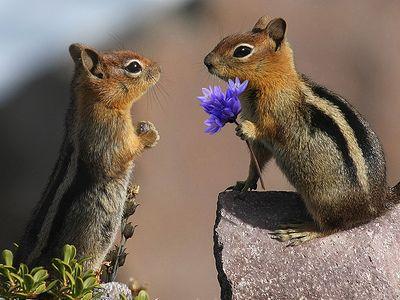 squirrelspicture.jpg