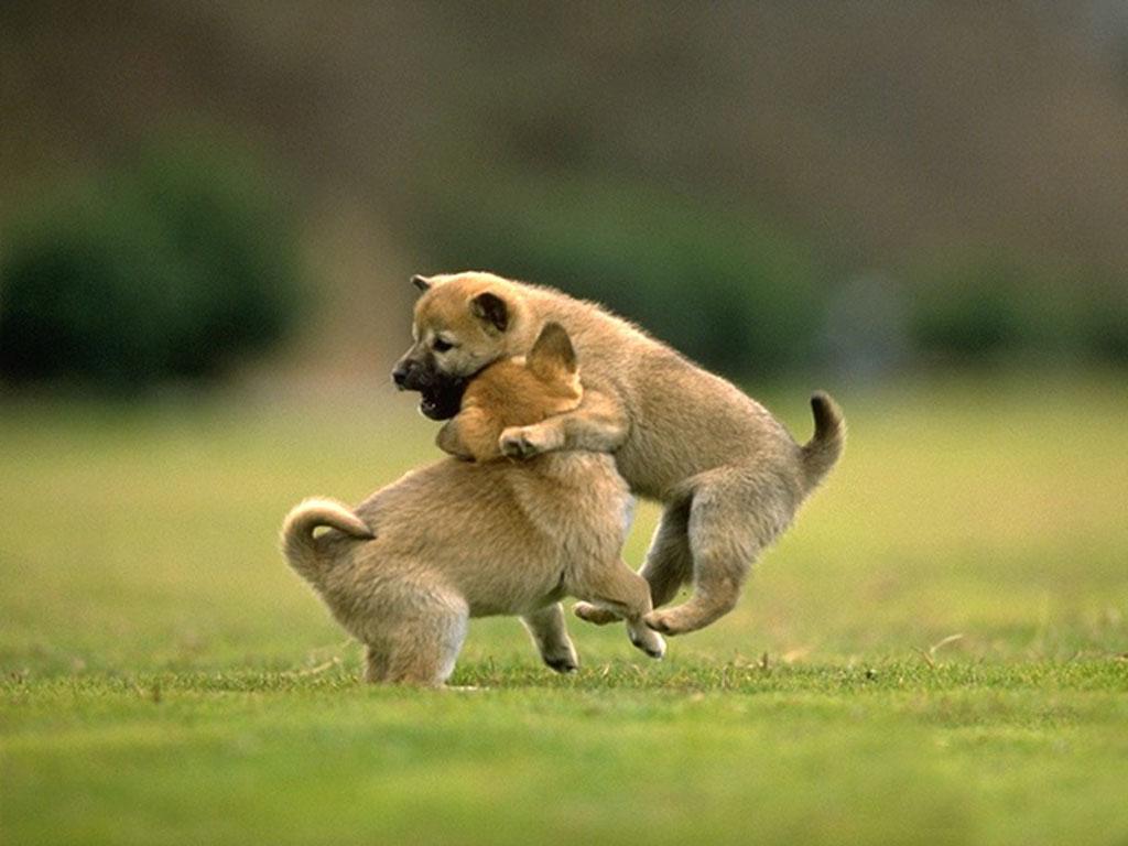 twosmalldogs.jpg