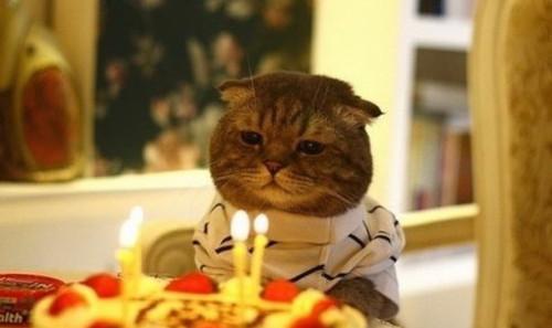 パーティーの猫